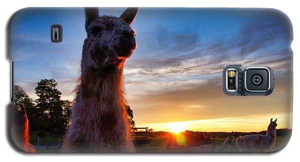 Drama Llamas Galaxy S5 Case