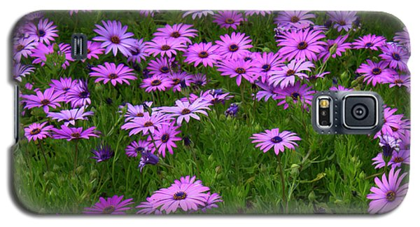Dreaming Of Purple Daisies  Galaxy S5 Case