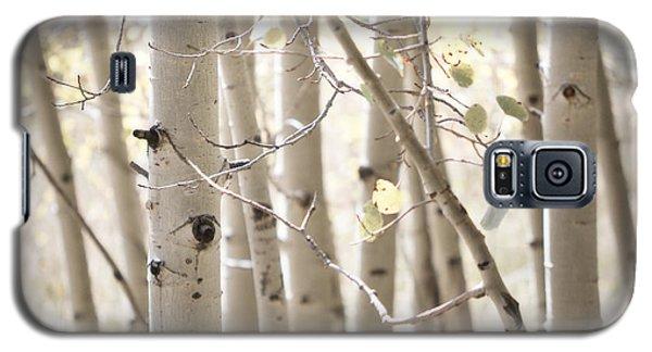 Dreamy Aspen Woodland Galaxy S5 Case by Andrea Hazel Ihlefeld