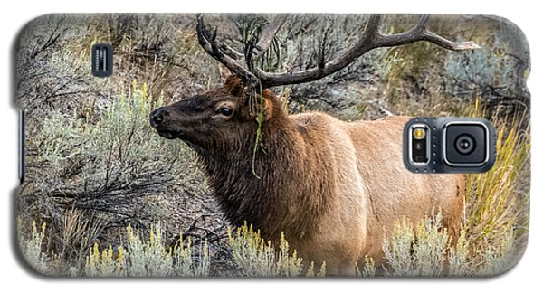 Galaxy S5 Case featuring the photograph Dressed For Rut by Yeates Photography