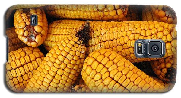 Dried Corn Cobs Galaxy S5 Case by LeeAnn McLaneGoetz McLaneGoetzStudioLLCcom
