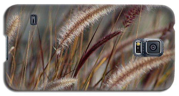 Dried Desert Grass Plumes In Honey Brown Galaxy S5 Case