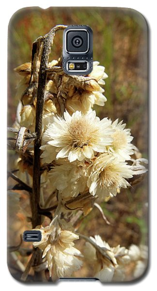 Galaxy S5 Case featuring the photograph Dried Flowers by Scott Kingery
