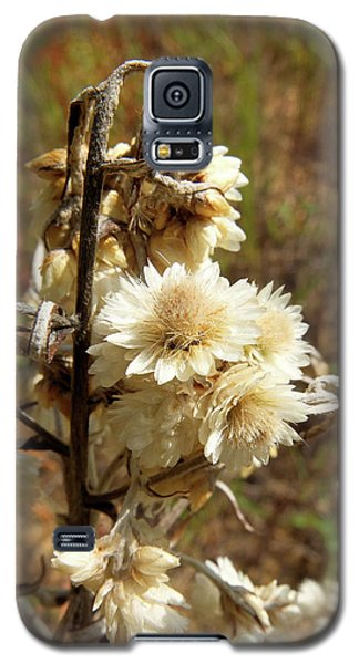 Dried Flowers Galaxy S5 Case by Scott Kingery