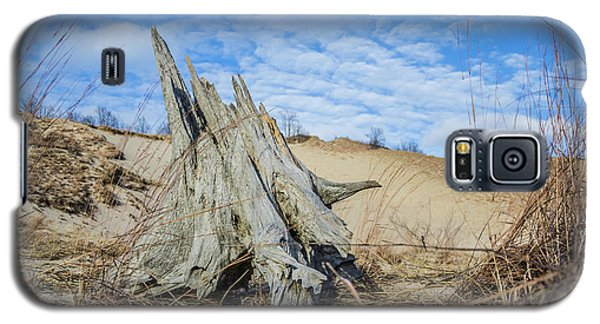 Dried Stump At Warren Dunes Galaxy S5 Case