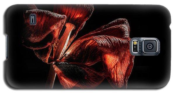 Tulip Galaxy S5 Case - Dried Tulip Blossom by Scott Norris