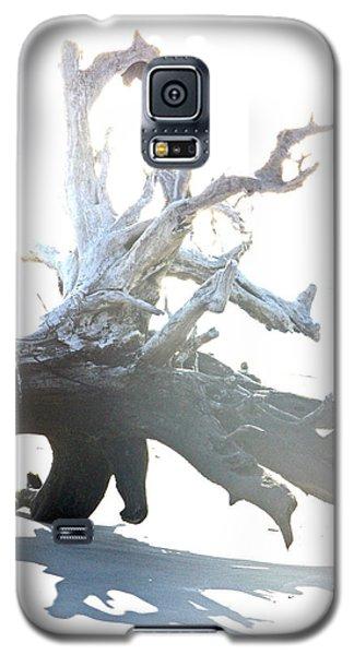 Drift Wood Galaxy S5 Case