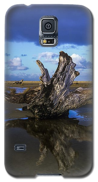 Driftwood And Reflection Galaxy S5 Case
