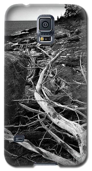 Driftwood Tree, La Verna Preserve, Bristol, Maine  -20999-30003 Galaxy S5 Case