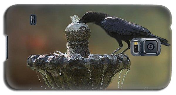 Drinking Crow Galaxy S5 Case