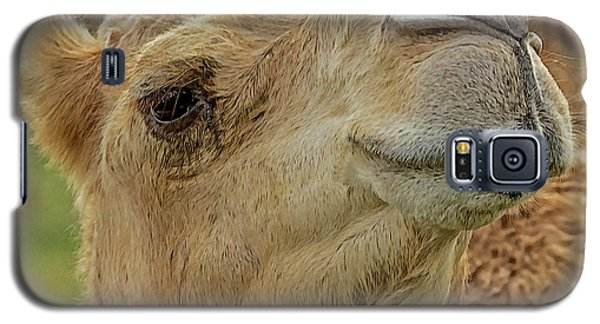 Dromedary Or Arabian Camel Galaxy S5 Case