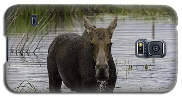 Drooling Cow Moose Galaxy S5 Case