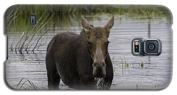 Drooling Cow Moose Galaxy S5 Case by Elizabeth Eldridge
