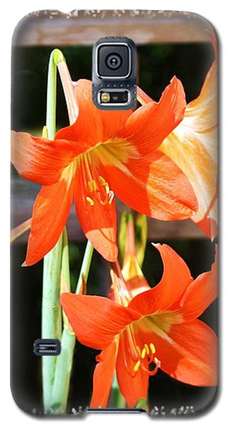 Galaxy S5 Case featuring the photograph Drooping Blooms Of Orange by Ellen O'Reilly