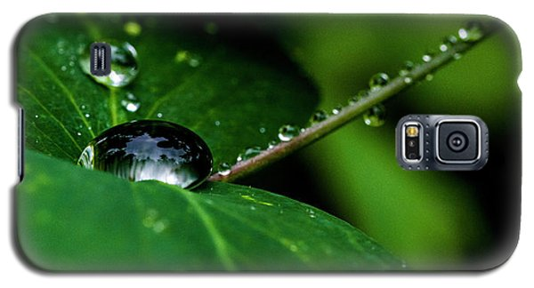 Galaxy S5 Case featuring the photograph Droplets On Stem And Leaves by Darcy Michaelchuk