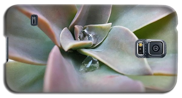 Droplets On Succulent Galaxy S5 Case by Ian Kowalski