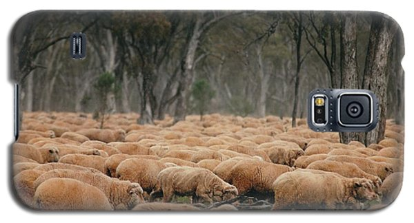 Droving Sheep  At Albert Australia Galaxy S5 Case