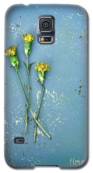 Galaxy S5 Case featuring the photograph Dry Flowers On Blue by Jill Battaglia