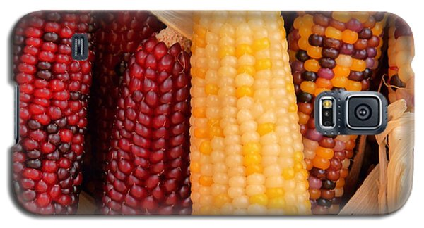 Dry Indian Corn Galaxy S5 Case