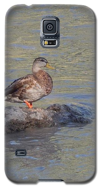Duck Alone On The Rock Galaxy S5 Case