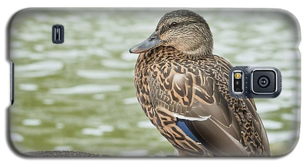 Duck By The Pond Galaxy S5 Case