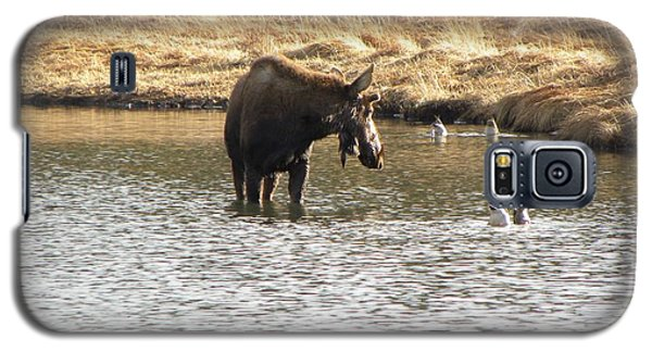 Ducks - Moose Rollinsville Co Galaxy S5 Case