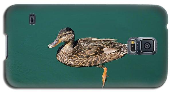 Duck Floats Galaxy S5 Case
