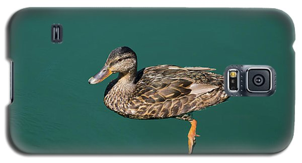 Duck Floats Galaxy S5 Case