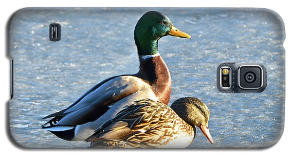 Duck Pair On Frozen Lake Galaxy S5 Case