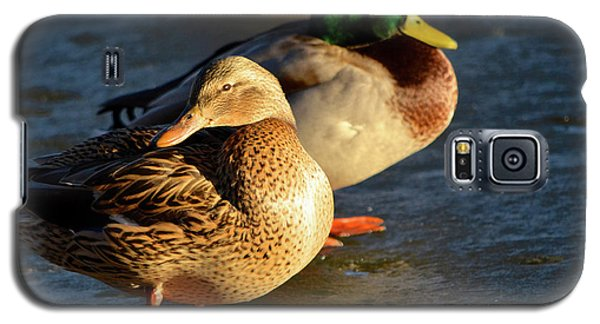 Duck Pair Sunbathing On Frozen Lake Galaxy S5 Case
