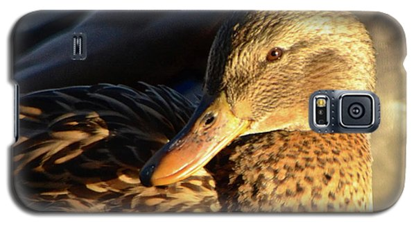 Duck Sunbathing Galaxy S5 Case