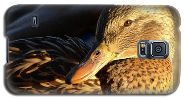 Duck Sunbathing Galaxy S5 Case