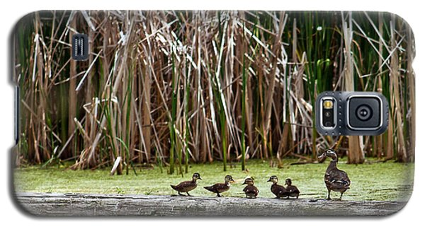 Ducks All In A Row Galaxy S5 Case