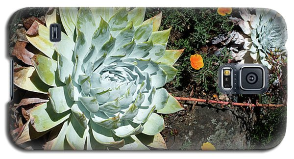 Galaxy S5 Case featuring the photograph Dudleya And California Puppy by Catherine Lau