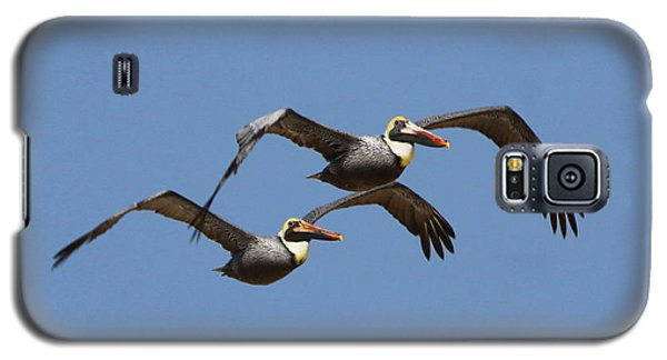 Duel Pelicans In Flight Galaxy S5 Case
