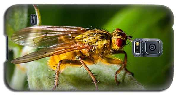 Dung Fly On Leaf Galaxy S5 Case
