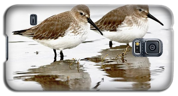 Dunlin Seeing Double Galaxy S5 Case
