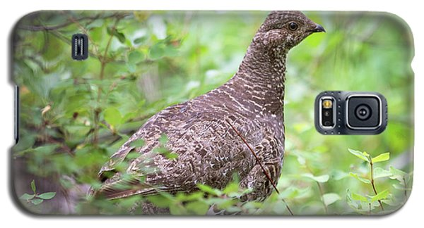 Dusky Grouse Galaxy S5 Case