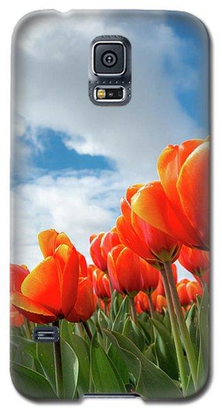 Dutch Tulips Near Keukenhof Galaxy S5 Case