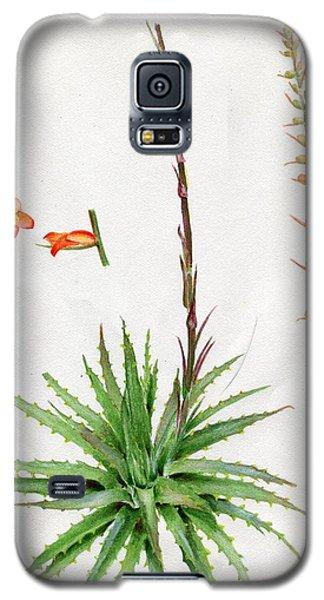 Dyckia Platyphylla Galaxy S5 Case