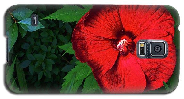 Dynamic Red Galaxy S5 Case