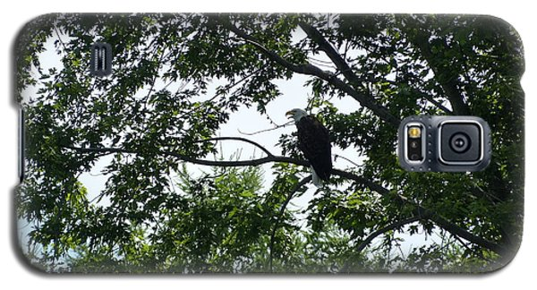 Galaxy S5 Case featuring the photograph Eagle At Codorus by Donald C Morgan