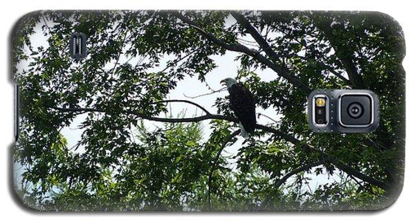 Eagle At Codorus Galaxy S5 Case by Donald C Morgan