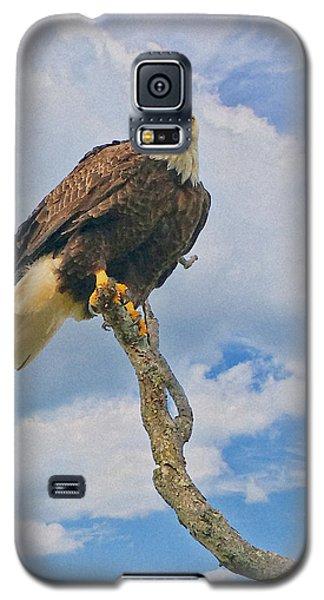 Eagle Eyes Galaxy S5 Case