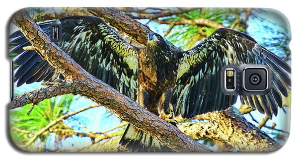 Galaxy S5 Case featuring the photograph Eagle Fledgling II 2017 by Deborah Benoit