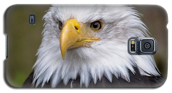 Eagle In Ketchikan Alaska Galaxy S5 Case by Michael Bessler