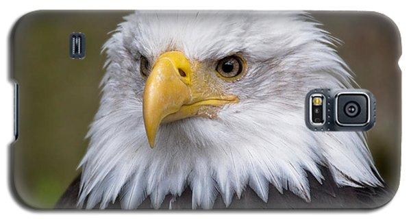 Eagle In Ketchikan Alaska Galaxy S5 Case