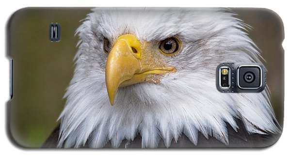 Eagle In Ketchikan Alaska Galaxy S5 Case