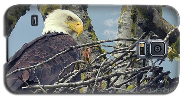 Galaxy S5 Case featuring the photograph Eagle In Nest by Rod Wiens