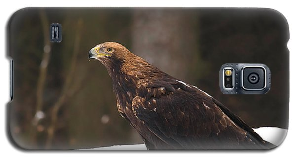 Eagle In The Snow Galaxy S5 Case